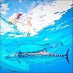 Tailhunter Sportfishing Pangas - La Paz