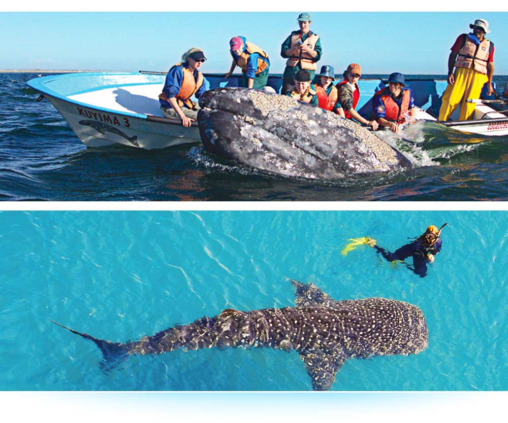 Sea of Cortez & #8212; Baja California Adventure Tours with Tailhunter International, La Paz Mexico ... Whale Watching & Snorkeling ... Check Out Our NEW Website vfor more Info/Pics/Videos