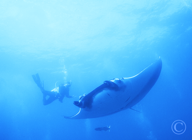 Scuba in the Sea of Cortez with Manta Rays - TAILHUNTER TOURS, La Paz, Baja California ...Aqua Graphics Underwater Photography
