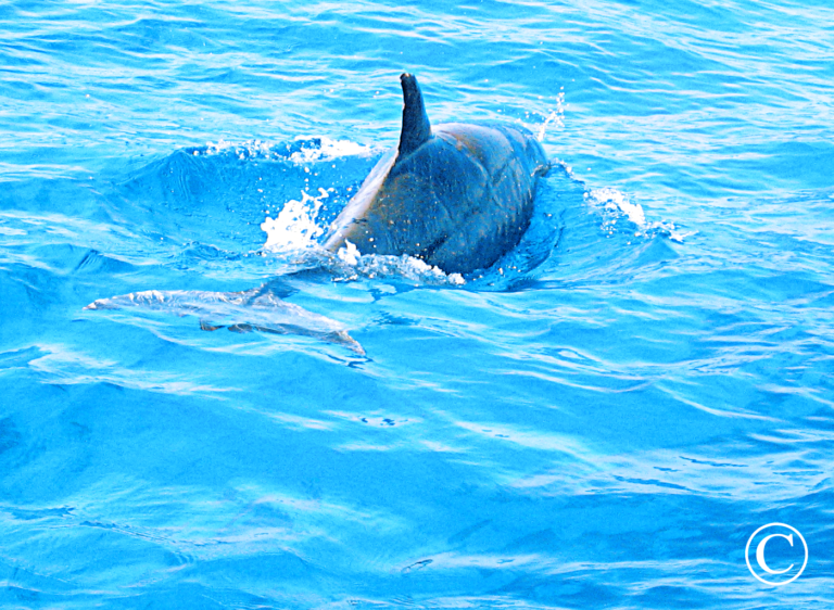 Sea of Cortez - Tailhunter Tours, Dolphin Encounters ...Aqua Graphics Underwater Photography