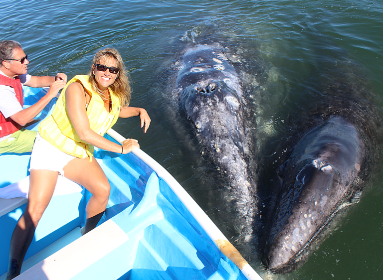 Friendly Whales in the Sea of Cortez - TAILHUNTER WHALE WATCHING TOURS.