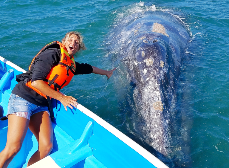 Petting Friendly Whales of the Sea of Cortez with Tailhunter Whale Watching Tours.