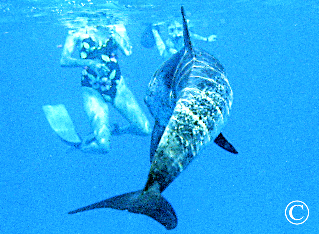 Sea of Cortez Family Adveture Tours - Tailhunter Tours, La Paz - Baja California....Aqua Graphics Underwater Photography
