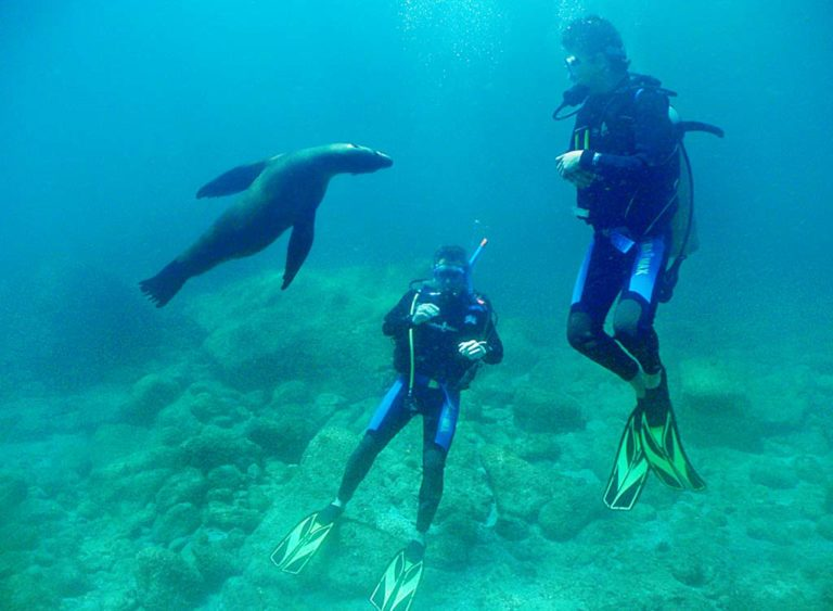 Scuba Diving Tours in the Sea of Cortez - TAILHUNTER INTERNATIONAL TOURS - La Paz - Baja